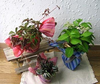 ミニ観葉植物和風ギフト