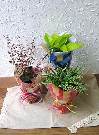 ミニ観葉植物プチギフト